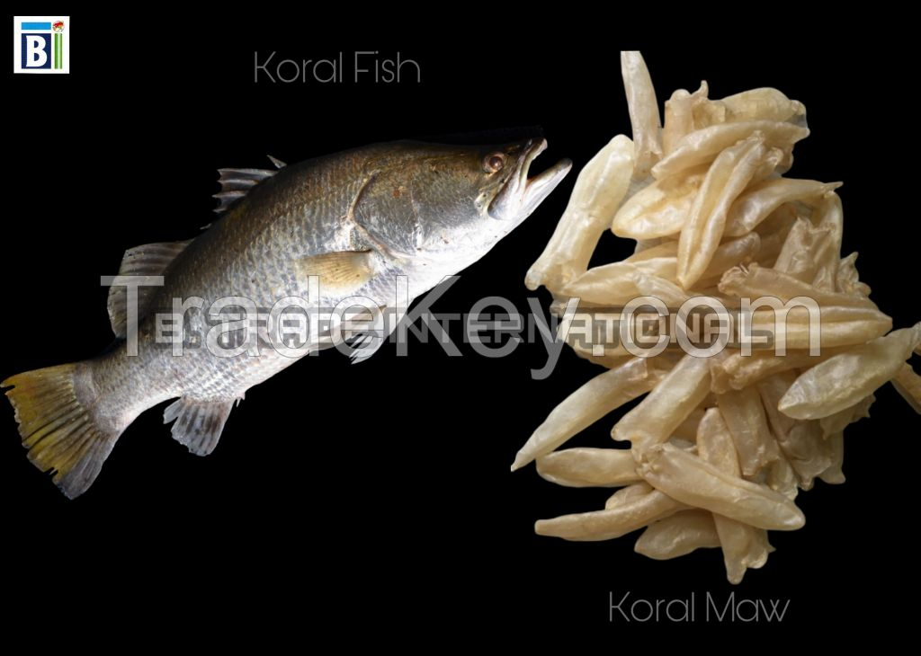 Koral Fish Maw