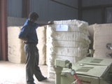 Cotton Lint Bales