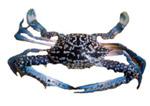 Frozen Blue Crab Meat