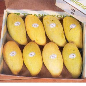Fresh Mangoes, Excellent Quality Pakistani Mangoes