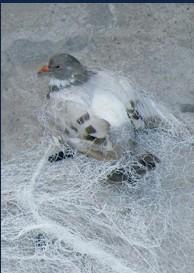 Animal Capture Shooting Net