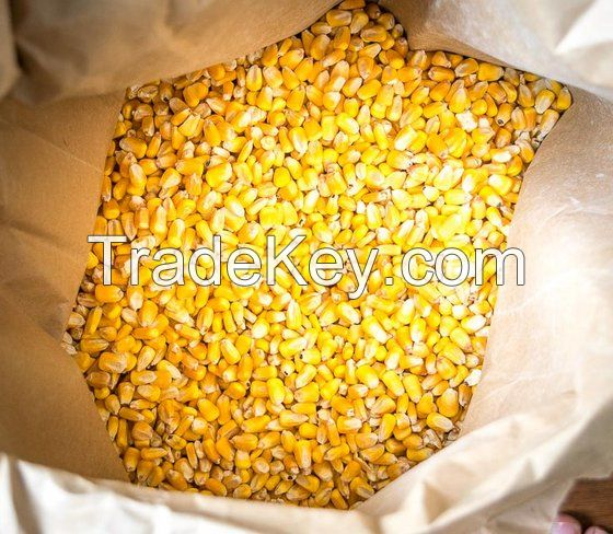 100% Natural Dehydrated Corn