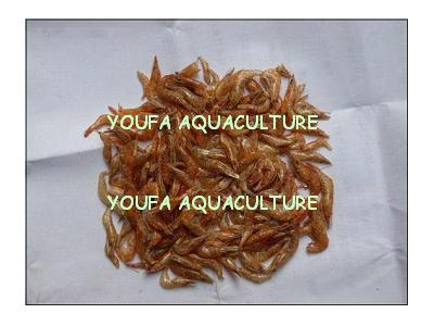 Dried shrimp (feed grade)