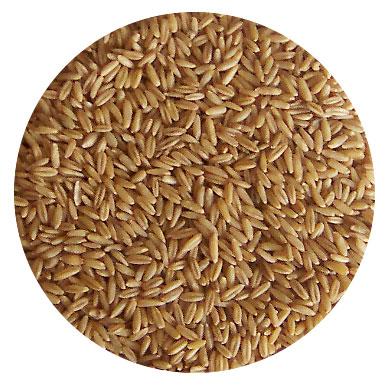 grains,beans