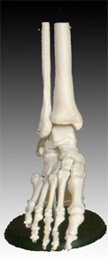 Foot Joint