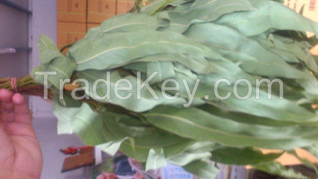 Eucalyptus whisks