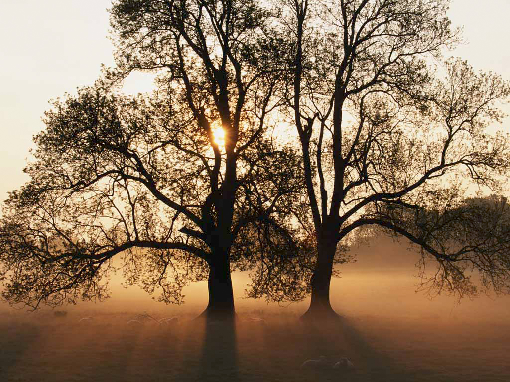 mahogany, teak, ebeny trees