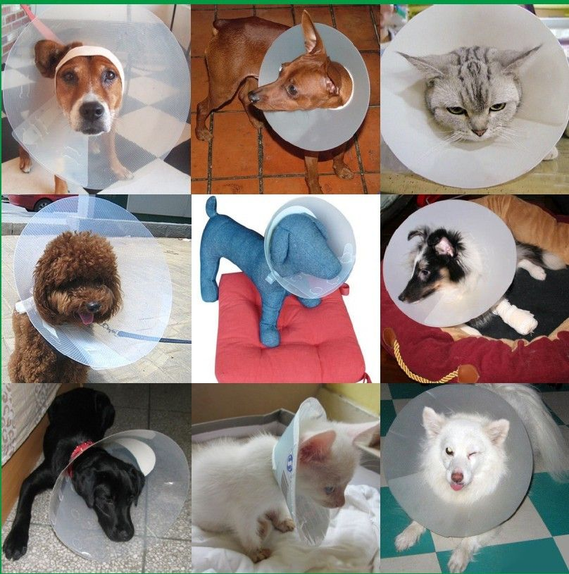 pet protection collar