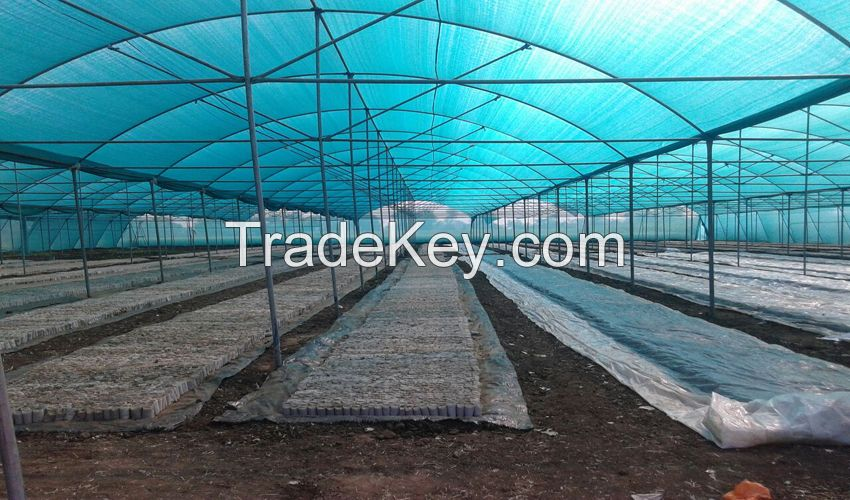 Greenhouse Naturally ventilated NVPH