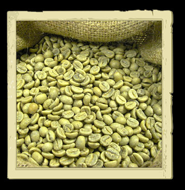 Export Green Coffee Beans | Green Coffee Bean Importer | Green Coffee Beans Buyer | Buy Green Coffee Beans | Green Coffee Bean Wholesaler | Green Coffee Bean Manufacturer | Best Green Coffee Bean Exporter | Low Price Green Coffee Beans | Best Quality Gree