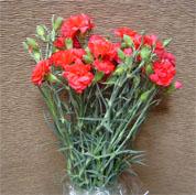 Fresh cut standart carnations
