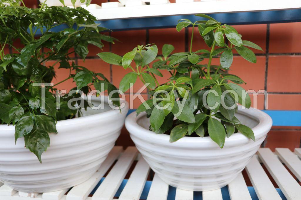 Gardenpots flowerpots ceramicspots Chaozhou flowerpot, Chinese flowerpot, flower pot, pot, garden pot, plant pot, planter