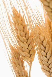 Dried Wheats