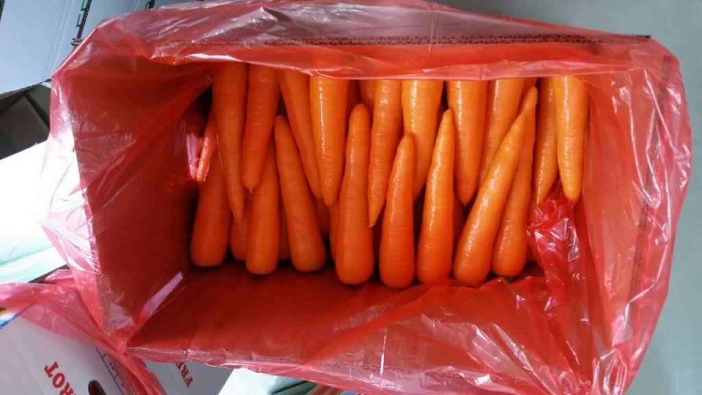 hot sale cheap carrots seller