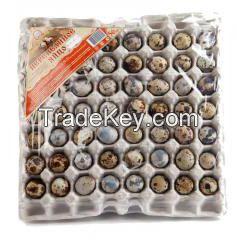 Quail egg tray for 56 cells
