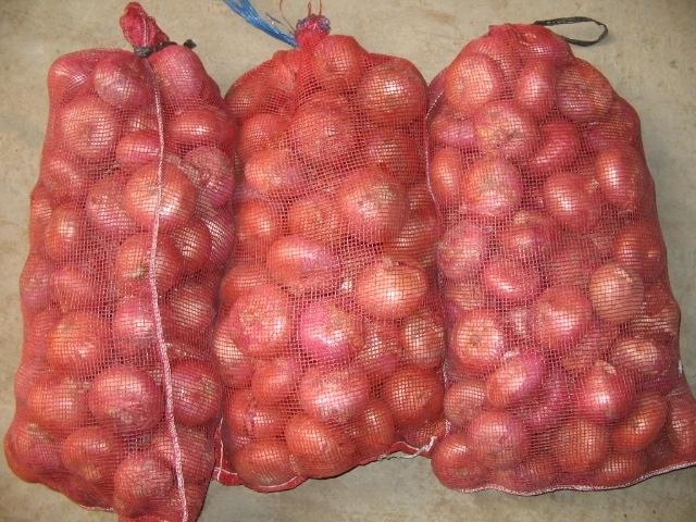 supply fresh onion