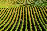 Organic Fertilizer 90 Minerals