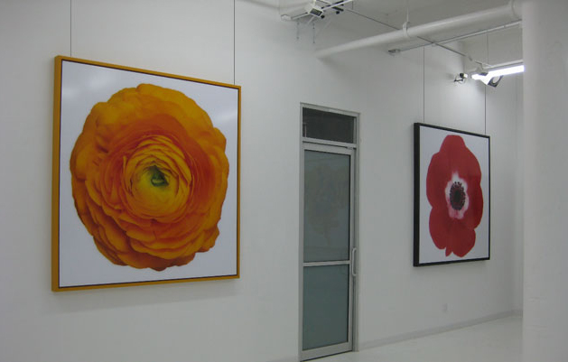 Art and Picture Hanging Systems!