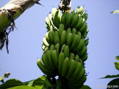 Fresh Ndizi Banana