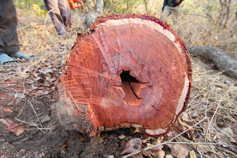 Pterocarpus Santalinus Red Sandalwood By Farmreal Ea Ltd