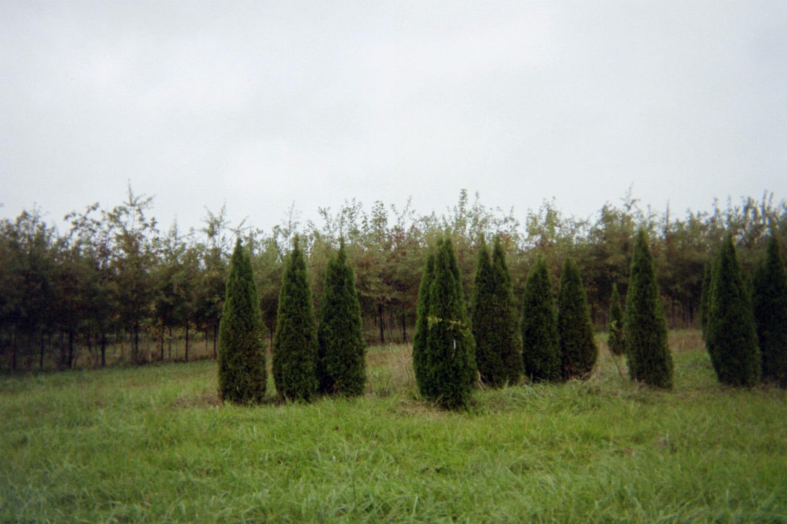Organic trees and shrubs