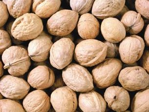 Walnut Kernels | Dried Fruits | Walnut Suppliers | Walnut Exporters | Walnut Manufacturers | Cheap Walnut | Wholesale Walnut | Discounted Walnut | Bulk Walnut | Walnut Buyer | Import Walnuts | Shelled Walnuts