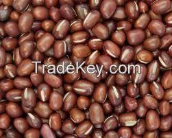 Vinga Beans