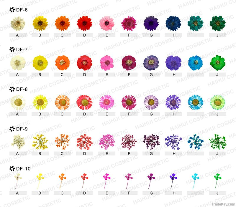Nail real dry flowers