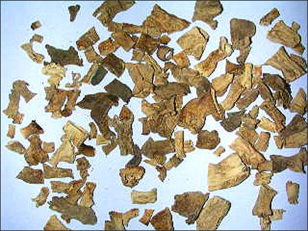 Mushrooms Dried Morels