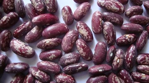 food bean, walnuts, sunflower seeds, dried fruits
