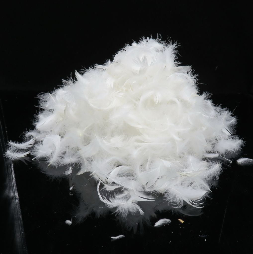 white duck feather