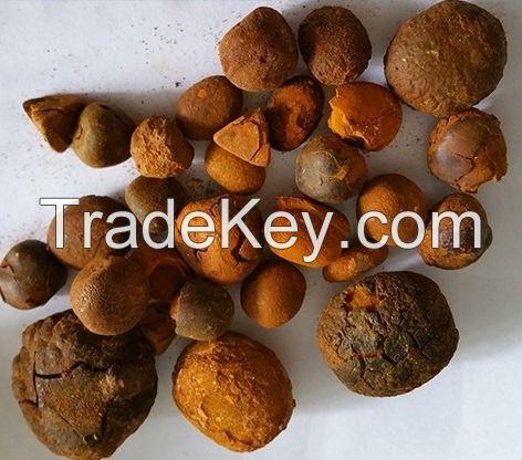 Ox gallstones, ox cow gallstones, Cow Gallstones, natural dried Ox,Cow, Cattle , Bile Gallstone, Bezoar, Calculas Bovis, Niu Huang