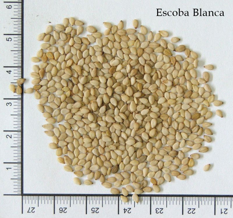 Chia, quinoa, quinoa, amaranth and sesame seeds from South America