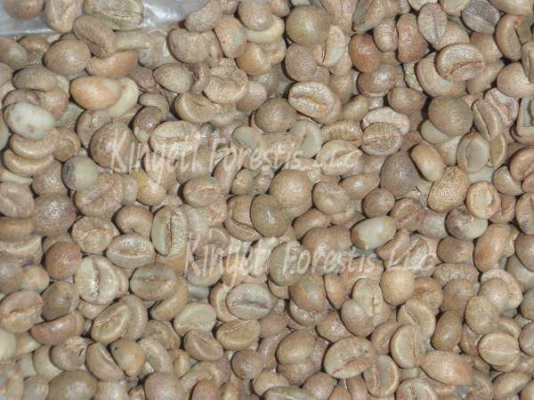 Export Robusta Coffee Beans | Robusta Coffee Bean Importer | Robusta Coffee Beans Buyer | Buy Robusta Coffee Beans | Robusta Coffee Bean Wholesaler | Robusta Coffee Bean Manufacturer | Best Robusta Coffee Bean Exporter | Low Price Robusta Coffee Beans |