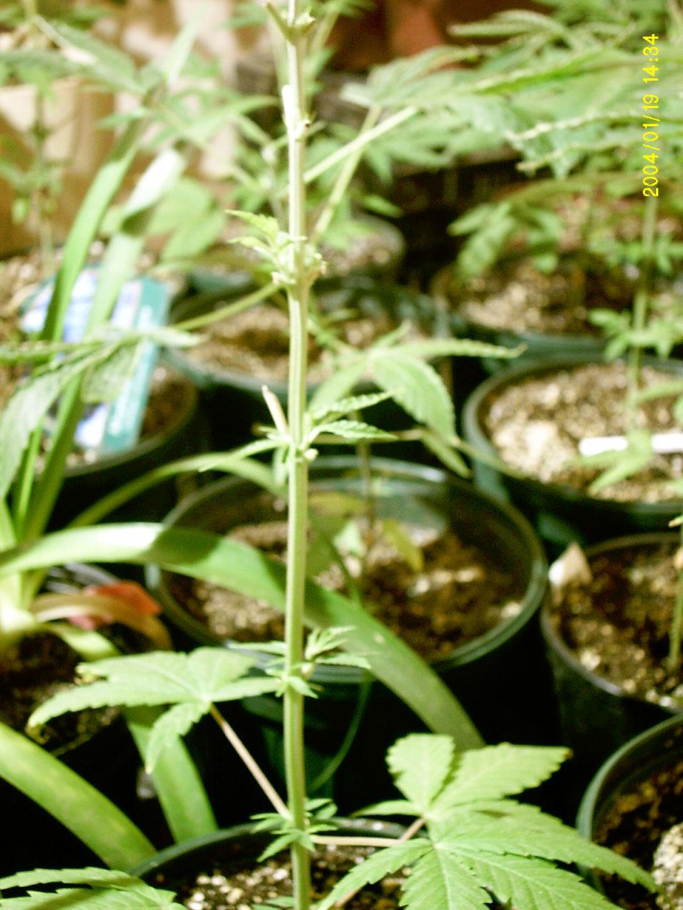Gorilla Grow Fertilizers