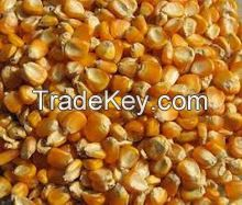 Yellow/White Corn/Maize/Corn Flour for Human and Animal consumption