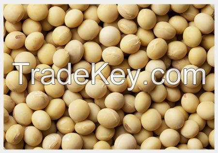 High Protein Soyabean Meal And Seeds