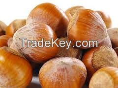 Shea Nuts/Shea Butter/Shea Nut Oil