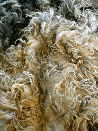 Raw Wool Fleece