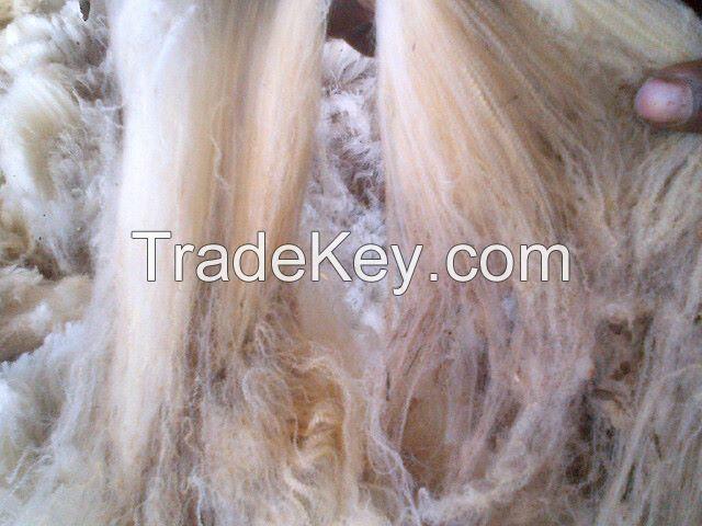 Raw merinos greasy wool