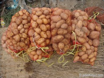 Vegetable Bag (Factory Price)
