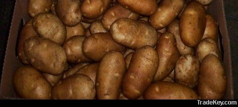 Potato@farm price