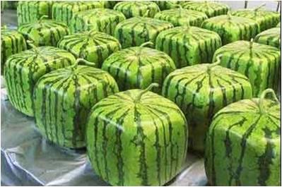 sweet watermelons