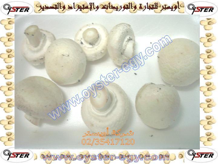 Agaricus Mushroom spawn,