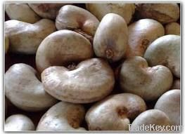 Cheap Cashew Nut   Wholesale Cashew Nut   Discounted Cashew Nut   Bulk Cashew Nut   Cashew Nut Suppliers   Cashew Nut Exporters   Cashew Nut Manufacturers   Cashew Nut Buyer   Import Cashew Nut