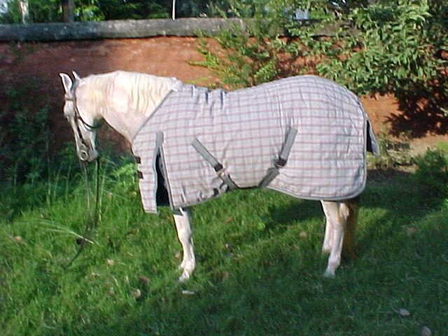 Horse Clothing Blanket