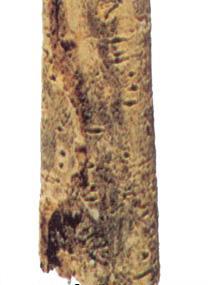 Magnolia Bark *****