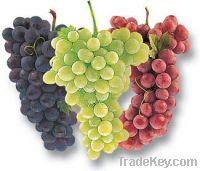 Grape Drinks