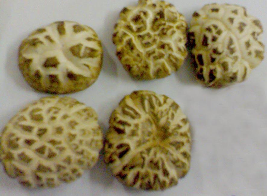 flower shiitake mushrooms