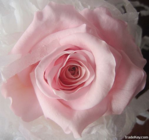 Wholesale High Quality Preserved Rose